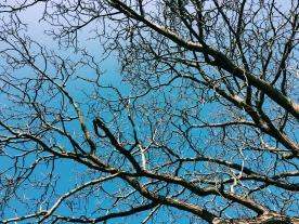Blue skies in Germany.