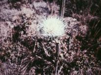 Flora, and fauna.
