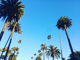 Palm trees in Beverly Hills.